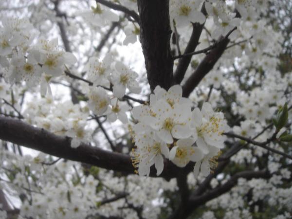 f:id:hekigyokuan:20100323065321j:image