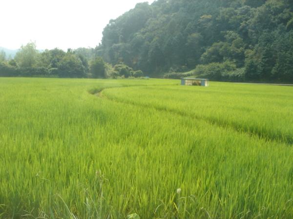 f:id:hekigyokuan:20100819102750j:image