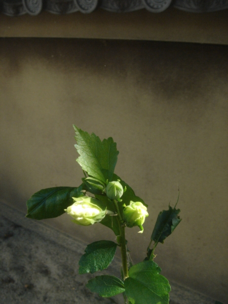 f:id:hekigyokuan:20100927090423j:image