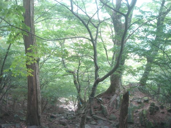 f:id:hekigyokuan:20101008124825j:image