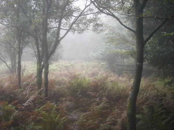 f:id:hekigyokuan:20101009100609j:image