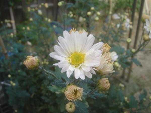 f:id:hekigyokuan:20101030143849j:image