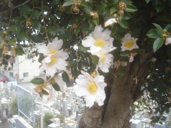 f:id:hekigyokuan:20101221114408j:image