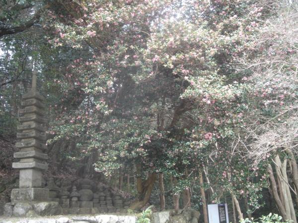 f:id:hekigyokuan:20110124154309j:image