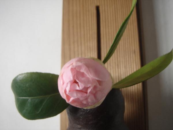 f:id:hekigyokuan:20110310092937j:image