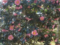 f:id:hekigyokuan:20110327083448j:image