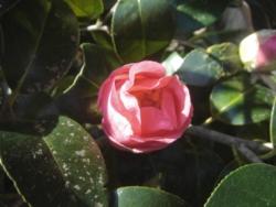 f:id:hekigyokuan:20110327083601j:image