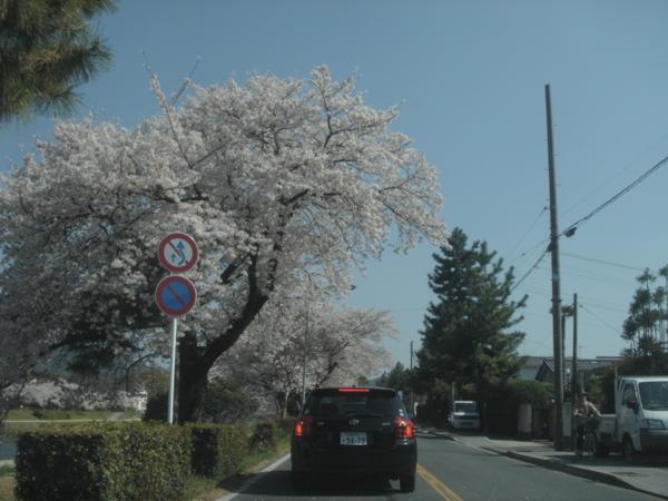 f:id:hekigyokuan:20110413143926j:image