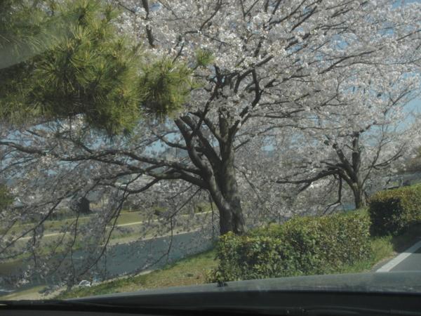f:id:hekigyokuan:20110413144117j:image