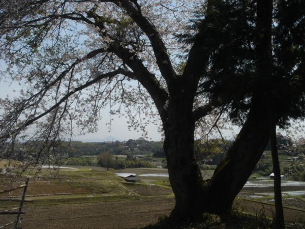 f:id:hekigyokuan:20110421113834j:image