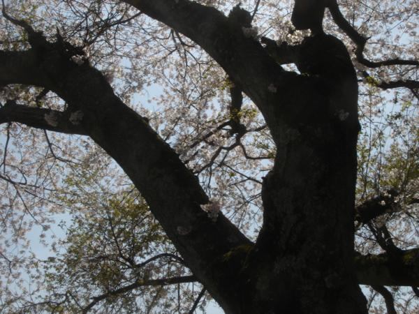 f:id:hekigyokuan:20110421113851j:image
