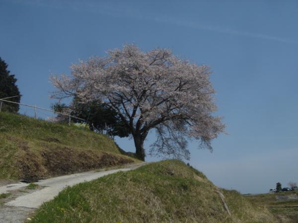 f:id:hekigyokuan:20110421114050j:image