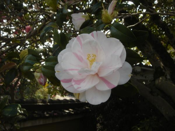 f:id:hekigyokuan:20110421134443j:image