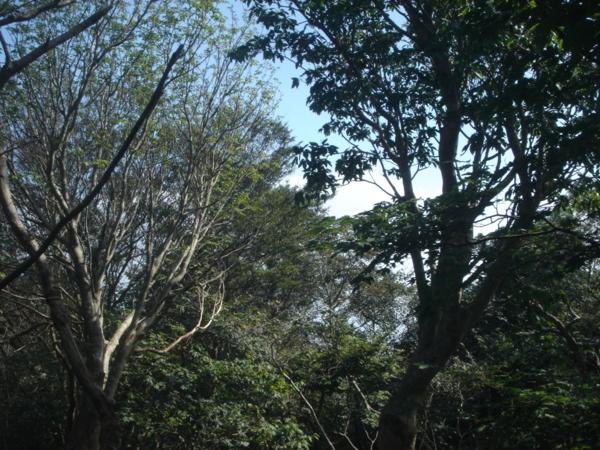 f:id:hekigyokuan:20110910143920j:image