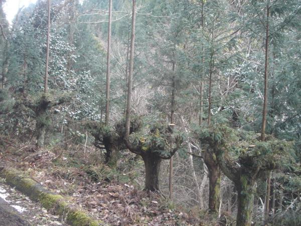 f:id:hekigyokuan:20120114152138j:image