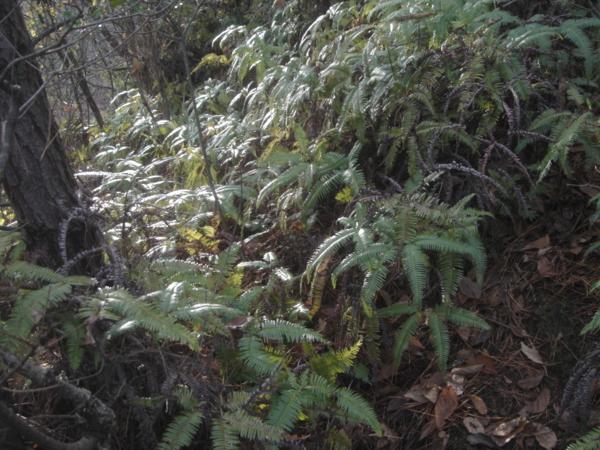 f:id:hekigyokuan:20120124152633j:image