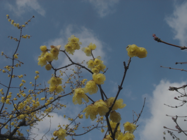 f:id:hekigyokuan:20120129104932j:image
