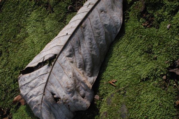 f:id:hekigyokuan:20120217101259j:image