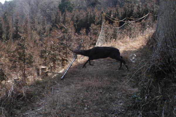 f:id:hekigyokuan:20120321144300j:image