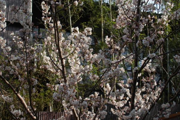 f:id:hekigyokuan:20120326083155j:image