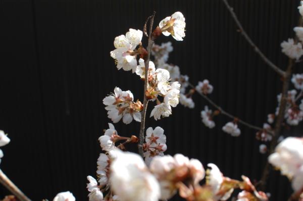 f:id:hekigyokuan:20120326083213j:image