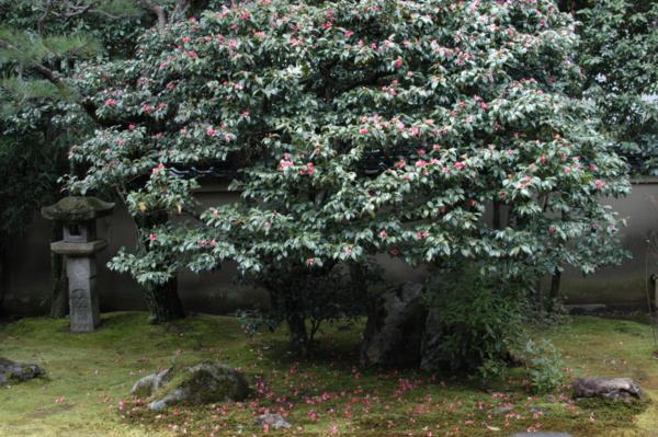 f:id:hekigyokuan:20120404091227j:image