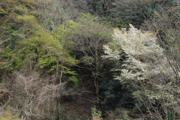 f:id:hekigyokuan:20120415150448j:image