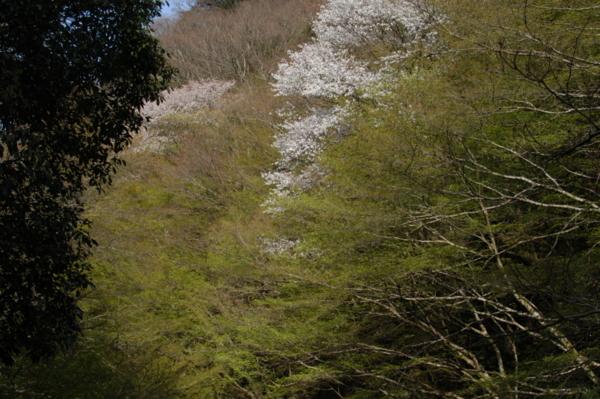 f:id:hekigyokuan:20120415162612j:image