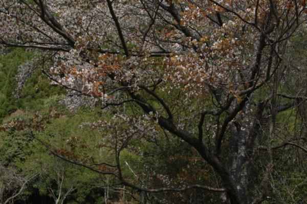 f:id:hekigyokuan:20120424093015j:image