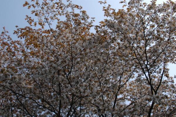f:id:hekigyokuan:20120424093218j:image