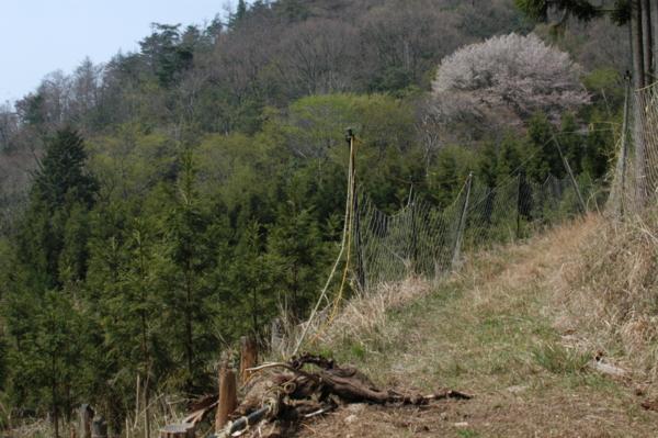 f:id:hekigyokuan:20120424093654j:image