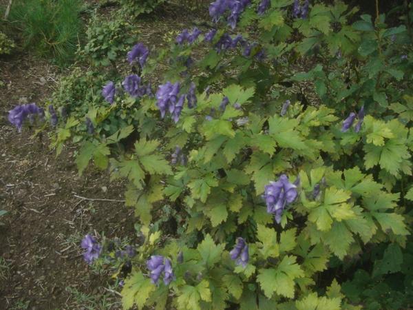 f:id:hekigyokuan:20120911113642j:image