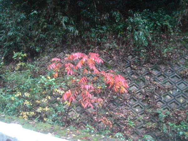f:id:hekigyokuan:20121111122136j:image
