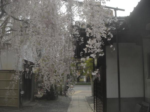 f:id:hekigyokuan:20130414143107j:image