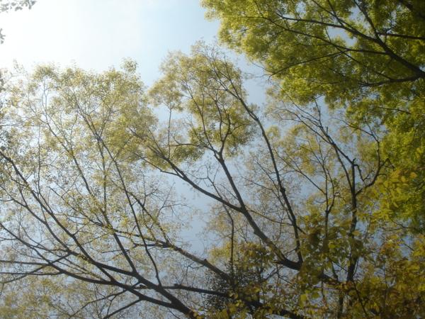 f:id:hekigyokuan:20130504100740j:image