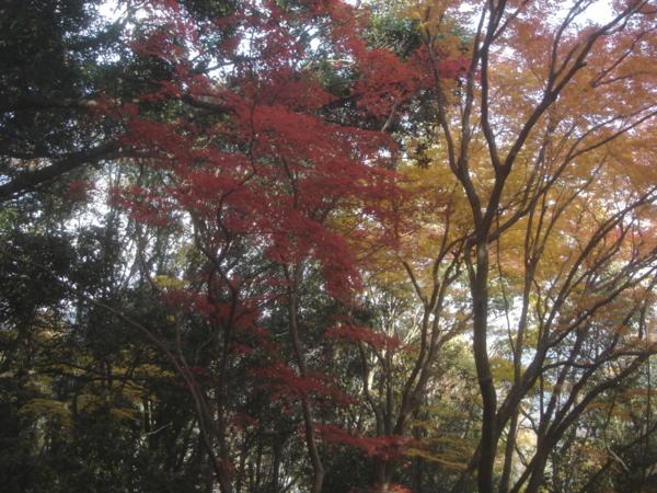 f:id:hekigyokuan:20131124132116j:image