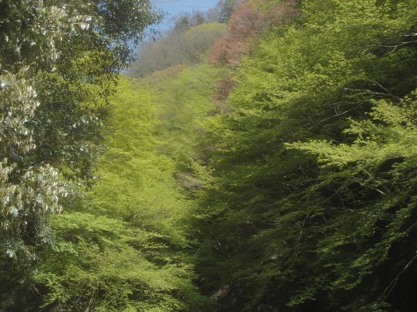 f:id:hekigyokuan:20140415134138j:image