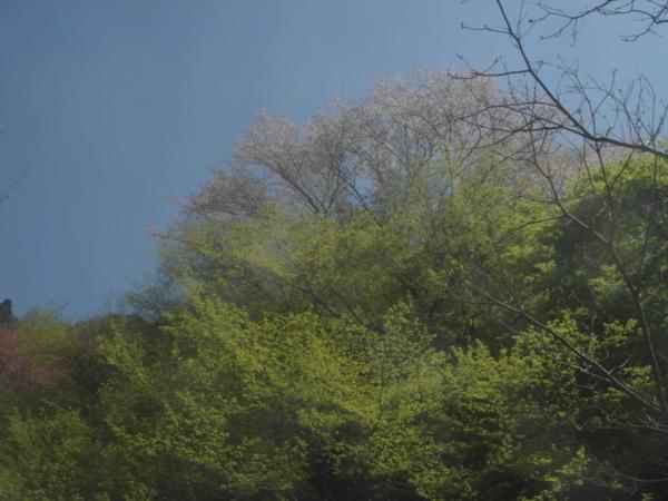 f:id:hekigyokuan:20140415134145j:image