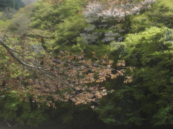f:id:hekigyokuan:20140415134343j:image