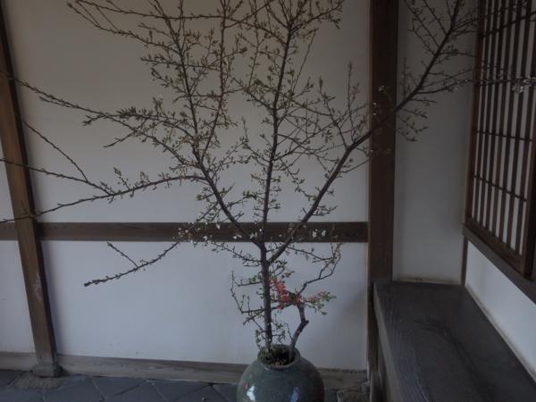 f:id:hekigyokuan:20170404084904j:image