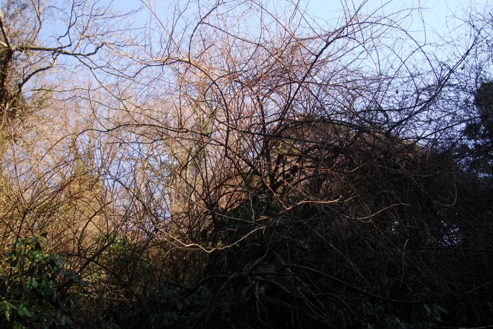 f:id:heliograph:20100311160318j:image