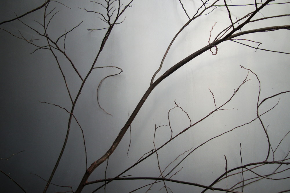 f:id:heliograph:20100330155124j:image