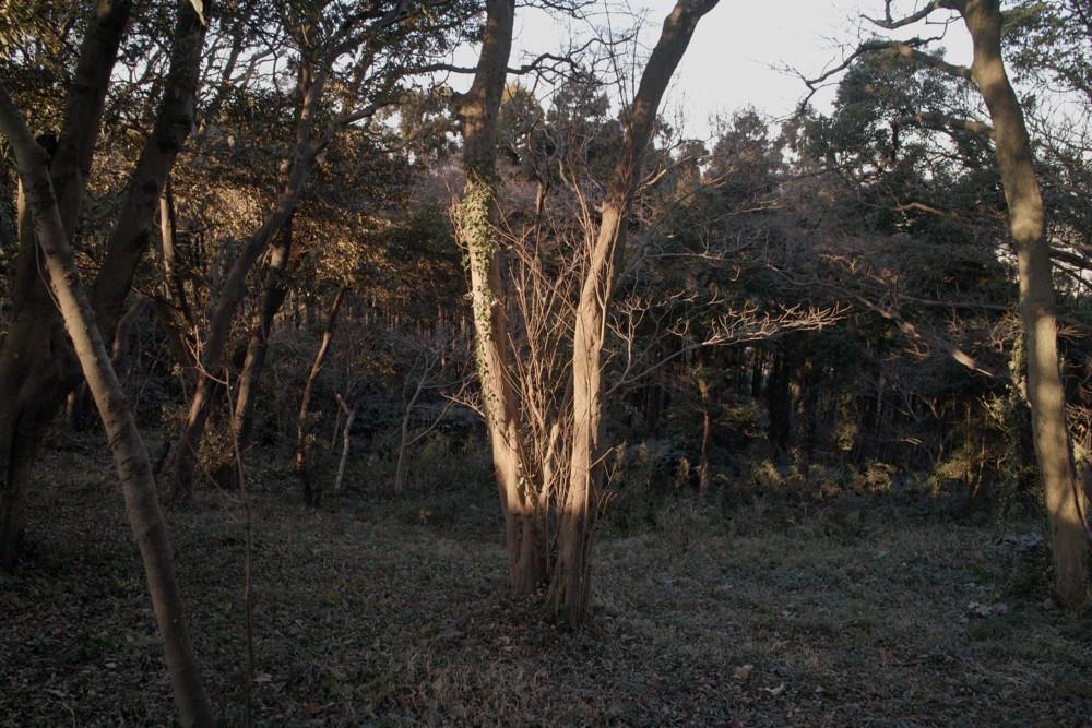 f:id:heliograph:20110110154537j:image