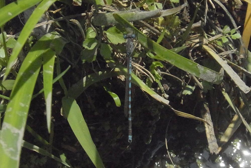 f:id:heliograph:20120513121440j:image