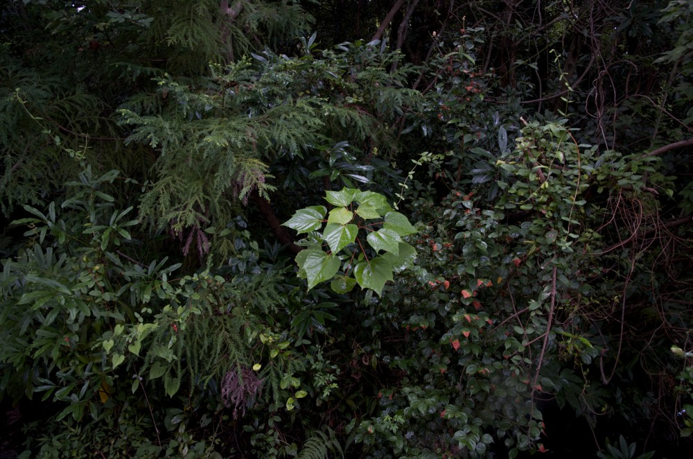 f:id:heliograph:20120827170752j:image