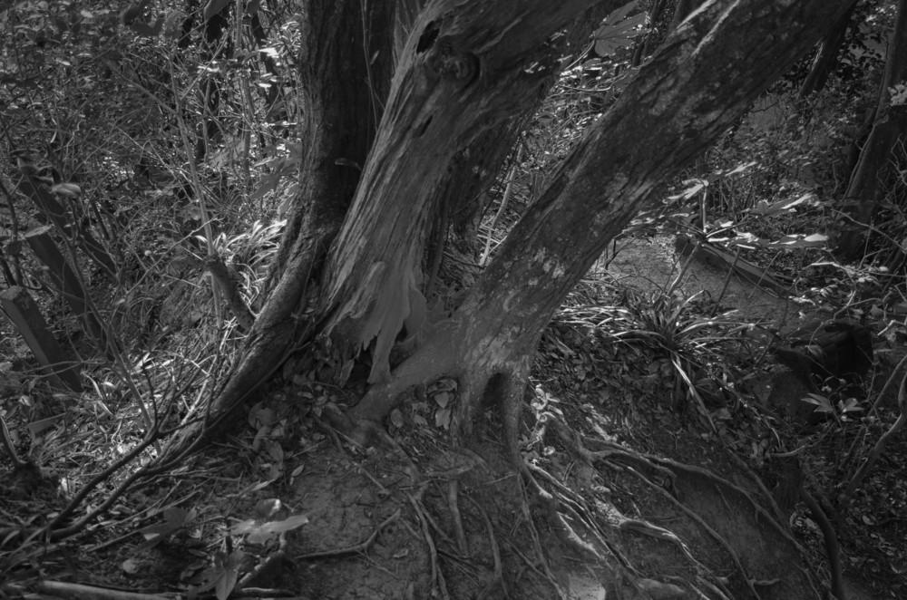 f:id:heliograph:20130111161148j:image