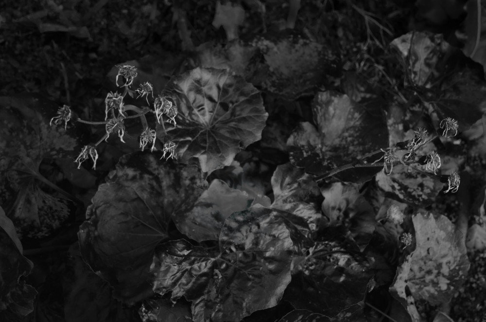 f:id:heliograph:20130111161904j:image