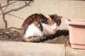 [猫]ひなたぼっこ