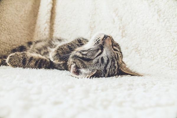 「よく眠る猫」二人目妊活中、リセットして落ち込んだとき、質の高い睡眠をとることが気持ちの切り替え方として大切です。