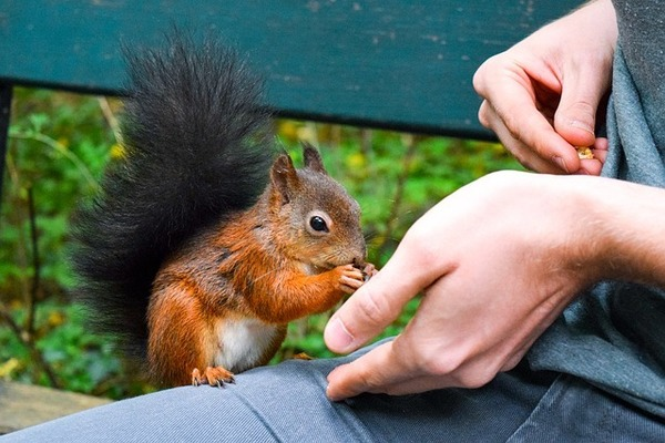 二人目妊活でおすすめしたいナッツのランキング二つを総合してまとめる。イメージ画像:ナッツを食べるリス。